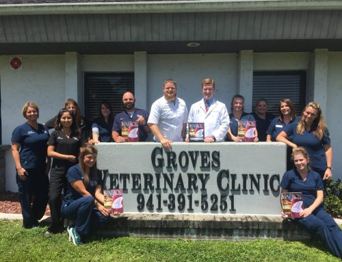 An In-Depth Look at Harbor's Hottest Veterinary Practice: Groves Veterinary Clinic