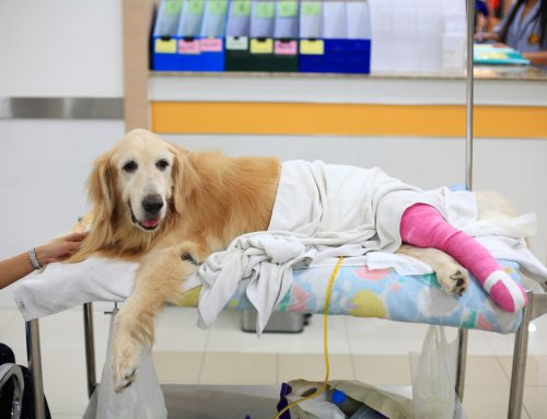 Is Orthopedic Surgery Right for Your Pet?