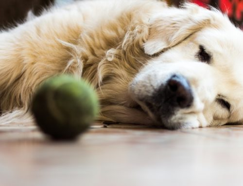 5 Tools to Improve Your Arthritic Pet's Mobility
