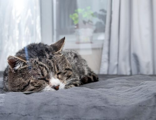 Shower Your Senior Pet with Special Care